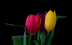 Picture flowers, bouquet, tulips