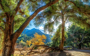 Picture light, trees, mountains, hdr