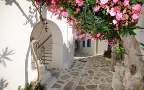 Picture flowers, home, Santorini, Greece