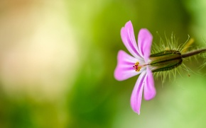 Wallpaper flower, nature, petals, stem