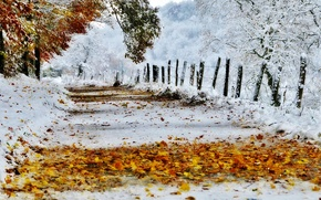 Picture road, autumn, leaves, snow