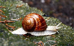 Picture nature, stone, snail, sink