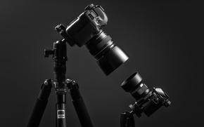 Picture David, Goliath, Canon EOS 5D mk II, Olympus OM-D E-M10