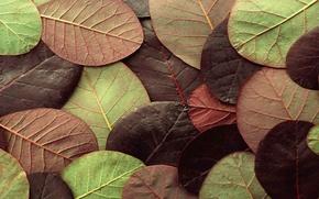 Wallpaper autumn, leaves, nature, sheet, color