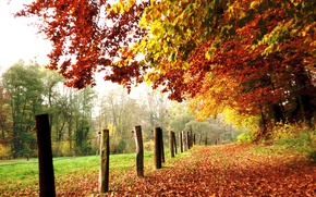 Picture field, leaves, trees, colors, Autumn, track, falling leaves, trees, nature, autumn, leaves, path, fall