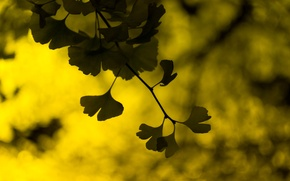 Picture leaves, macro, yellow, green, background, widescreen, Wallpaper, blur, wallpaper, leaves, widescreen, leaves, background, bokeh, full …