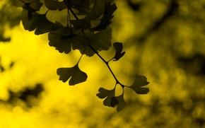 Wallpaper leaves, widescreen, leaves, blur, HD wallpapers, Wallpaper, leaves, full screen, background, fullscreen, yellow, macro, green, ...