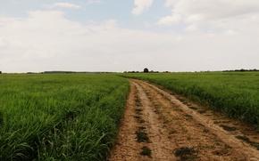 Picture road, field, summer, grass, nature, Wallpaper