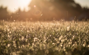 Picture grass, macro, nature, Rosa, glare, morning, bokeh