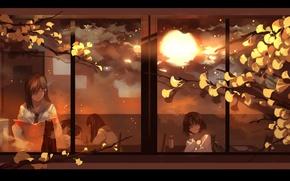 Picture the sun, branches, window, class, school, Schoolgirls, black cat