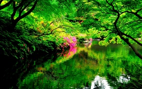 Picture reflection, trees, lake, Park, ciety