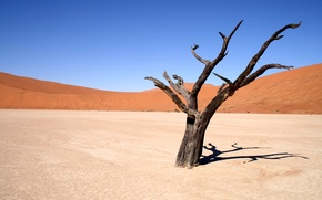 Picture sand, the sky, landscape, tree, the wind, desert
