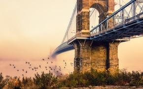Wallpaper birds, bridge, the city, fog, morning