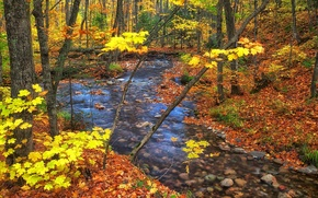 Picture Ontario, stream, trees, Canada, autumn, forest, leaves
