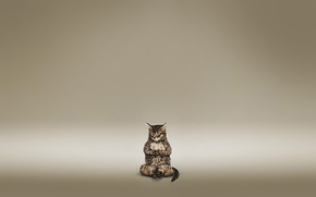 Picture cat, meditation, brown