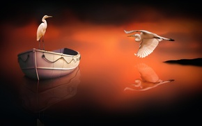Picture birds, reflection, boat