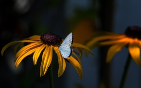 Picture flowers, nature, butterfly, plants, insect