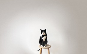 Picture animals, cat, look, butterfly, Koshak, chair, tie