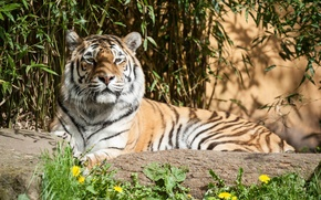 Picture flowers, tiger, stone