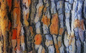 Picture tree, trunk, bark