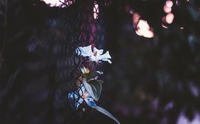 Picture flower, mesh, bokeh, netting