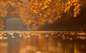 Picture autumn, trees, nature, house, river, bokeh