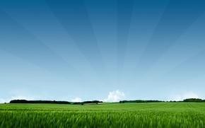 Wallpaper green, field, nature