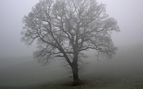 Wallpaper fog, field, tree