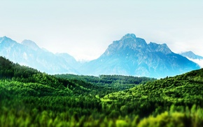 Wallpaper forest, trees, Mountains