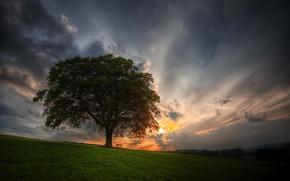 Wallpaper field, the sky, sunset, tree