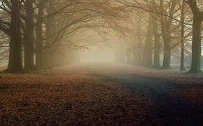 Picture autumn, trees, nature, fog, morning, the dry leaves