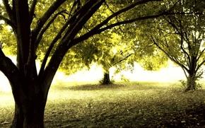 Wallpaper autumn, forest, the sun, trees