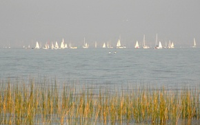 Picture the sky, lake, boat, plants, yacht, sail, regatta