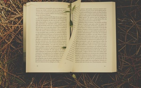 Picture grass, book, novel