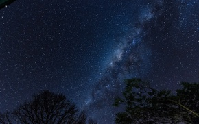 Picture space, stars, trees, night, space, the milky way, silhouettes