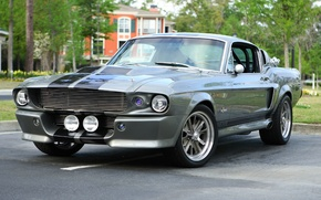 Picture Mustang, Ford, Shelby, Eleanor, GT 500, '1967