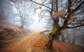 Wallpaper forest, forest, frozen