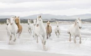 Picture sea, shore, coast, horses, horse, the herd