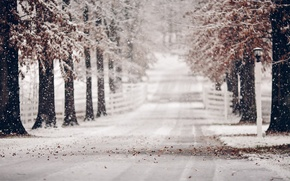 Picture winter, road, leaves, snow