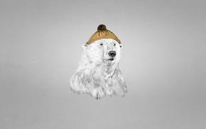 Picture hat, polar bear, bear, dark background