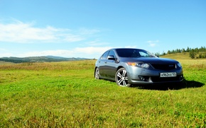 Picture greens, forest, summer, grass, Honda, Honda accord, accord 8