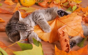 Picture leaves, Kitty, striped, plays