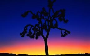 Picture sunset, tree, minimalism, 150