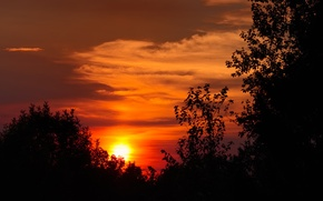 Picture the sky, the sun, clouds, trees, sunset, silhouette, glow