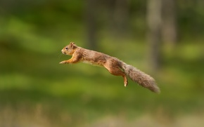 Picture background, jump, protein, red, flight, bokeh