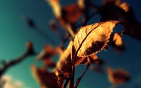 Wallpaper autumn, color, Leaves