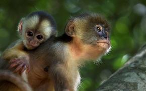 Picture monkey, Amazon, (film)