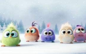Picture winter, snow, mood, cartoon, birds, Hatchlings Angry Birds