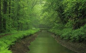 Wallpaper forest, bridge, river