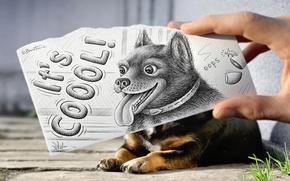 Wallpaper animal, the inscription, figure, hand, dog